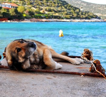 Greece's stray dogs and cats