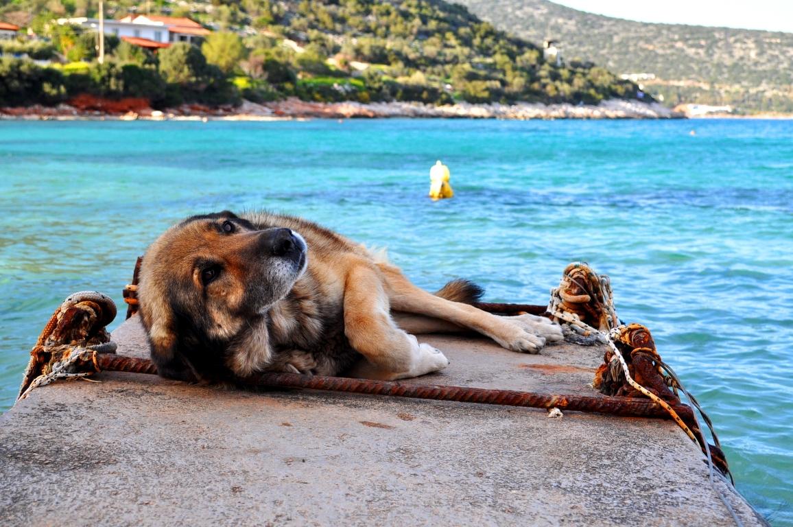 Greklands herrlösa hundar och katter